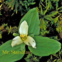 Cover of track orchid by Mr. Standfast