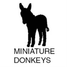 Cover of track Minature Donkeyz (Dubstep) by Phloem (Sintex)