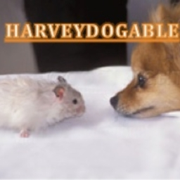 Avatar of user HarveyDogable