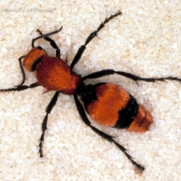 Avatar of user Velvet Ant
