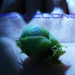 Cover of track Cyber Tribe Genesis RmX by Psyclone