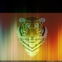 Cover of track Tiger Trance by Tiger