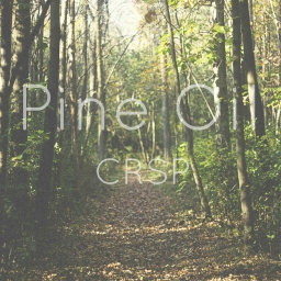 Cover of track Pine Oil by Hishiagi
