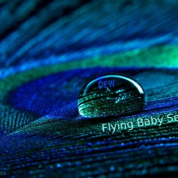 Cover of track Dew by Flying Baby Seal