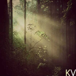 Cover of track Forest's Visions by Karl Vegas