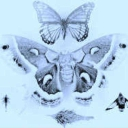 Cover of track Lepidoptera  (Zignabah Remix) by zignabah