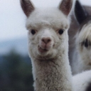 Avatar of user Alpacaman47