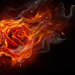 Cover of track One roses flame by MCmusicMiha