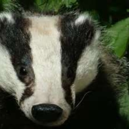 Avatar of user Badgerboy