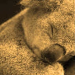 Cover of track Koala's Dream by DNH