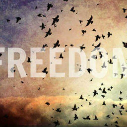 Cover of track Bpliego - Freedom by bpliego
