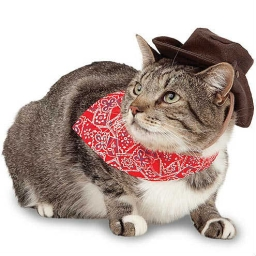 Cover of track *Cats in Cowboy Hats* by Juicy Salmon