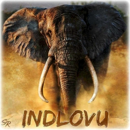 Cover of track Indlovu (Original Mix) by ShaneRoss