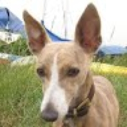 Avatar of user largewhippet