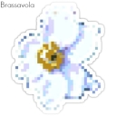 Cover of album Brassavola by Belody (Irrelevant)