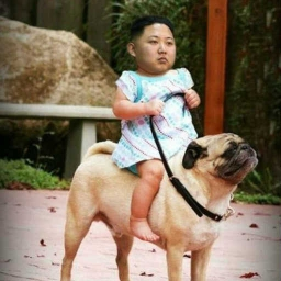 Image result for kim jong un eats dogs
