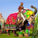 Cover of track Jaipur elephant by horsewind