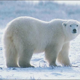 Cover of track polar Bear music by andreab1