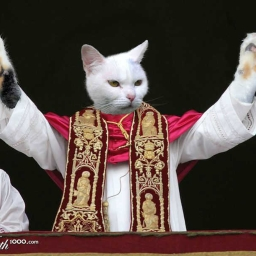 Cover of track meta-pope-cat by itsnordy
