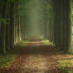 Cover of track path through the forest by Dj Dante